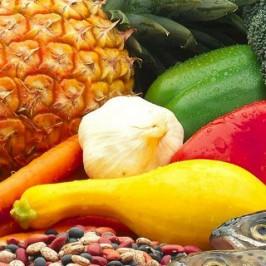 Alimentación, Dietética y Nutrición